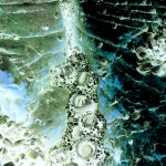 anemone1 900x1500
