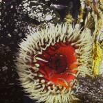 anemone10 1200x1700