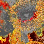anemone11 1200x1700