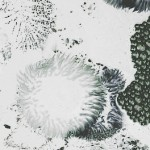 anemone16 700x1700