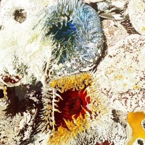 anemone19 1400x1400