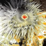 anemone4 3300x1400