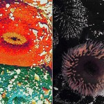 anemone5