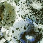 anemone5 950x950
