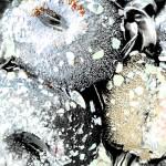 anemone6 950x950